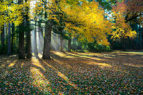 fall autumn foliage fallen fallenleaves leaves sunlight morning trees forest red yellow pentax k1 pentaxk1 fog mist landscape massachusetts shadows