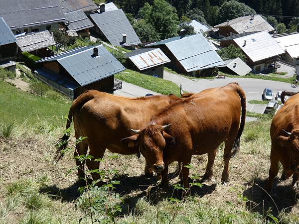 es vaches de Boudin