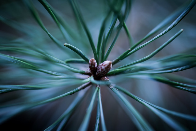 Evergreen... (explored!)