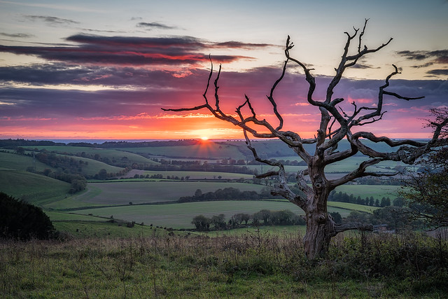Sunset at the old dead tree
