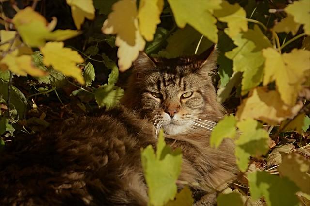 i buskene ...........