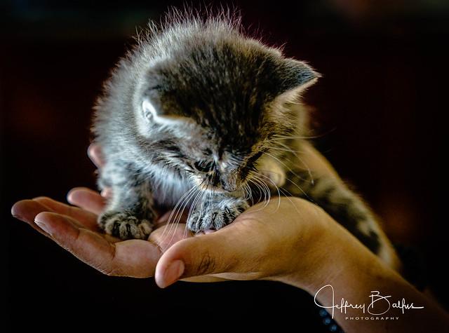 Kitten &  a helping hand 949814