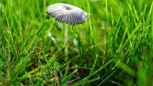 #Mushrooms - 8970