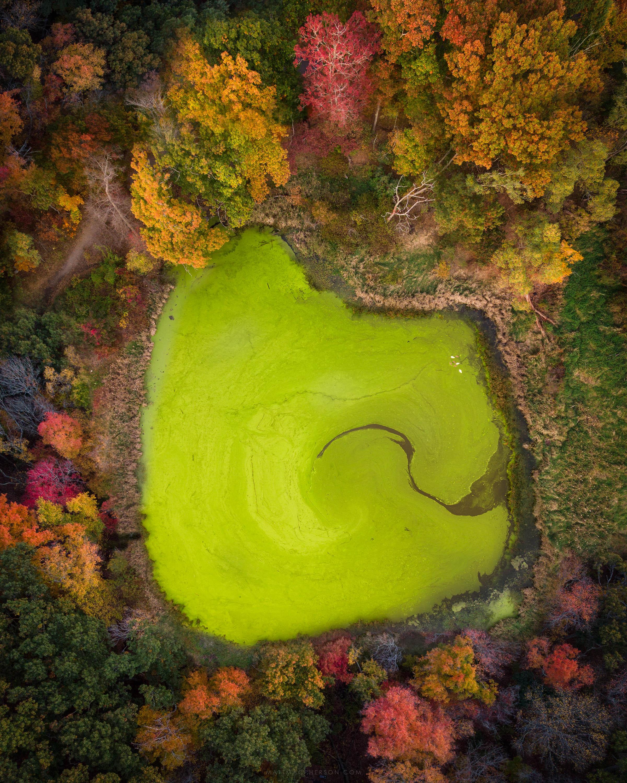 Intense algae bloom this year on a pond in Lexington, Massachusetts [OC][3000x2400]