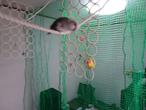 放鳥用のロープ