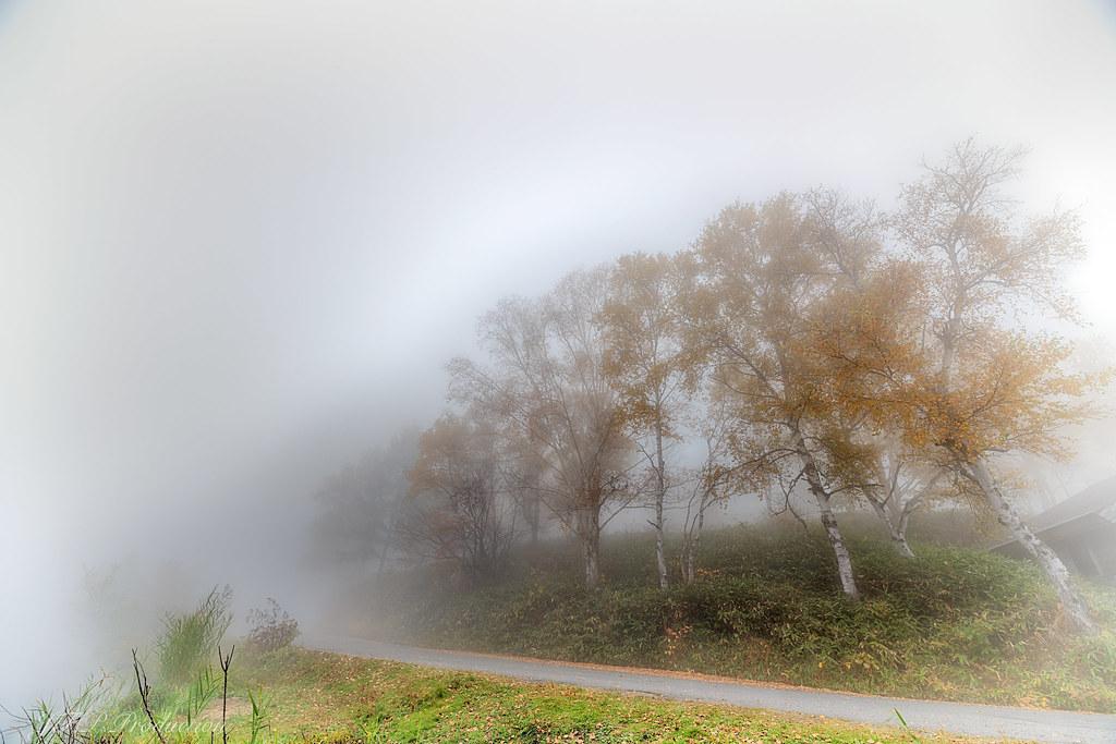 霧の白樺_HDR