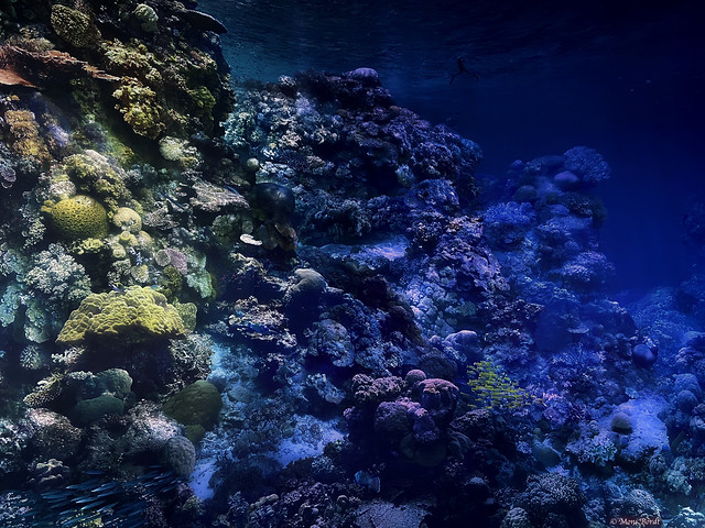 Great Barrier Reef  (Gasometer Pforzheim)
