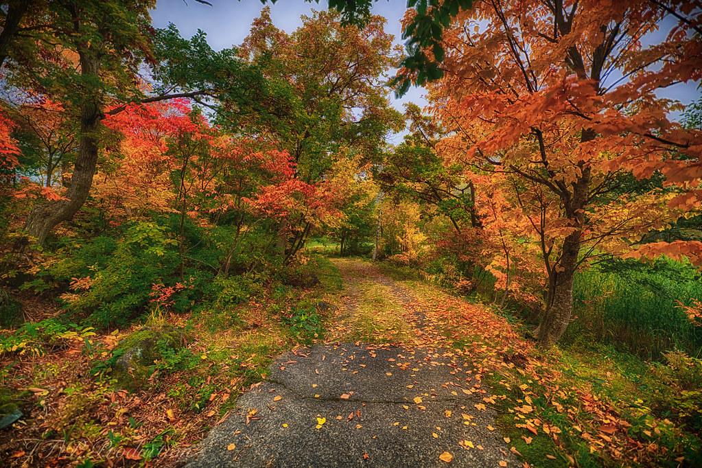 森の虹色トンネルSFVer_HDR