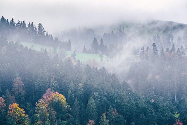 Misty Emmental