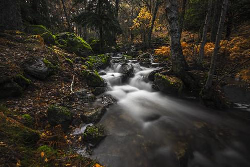 Green and ocher Autumn
