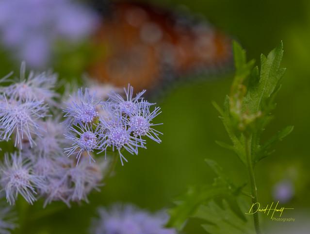 Butterfly Bokeh-9164