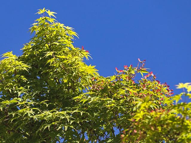 Día luminoso de primavera / bright spring day :-)