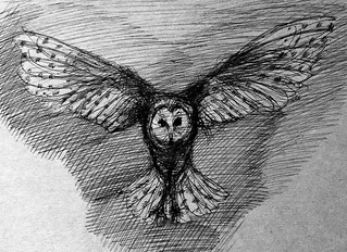 Barn Owl. Ballpoint pen drawing by jmsw, on recycled card. Only on this site,