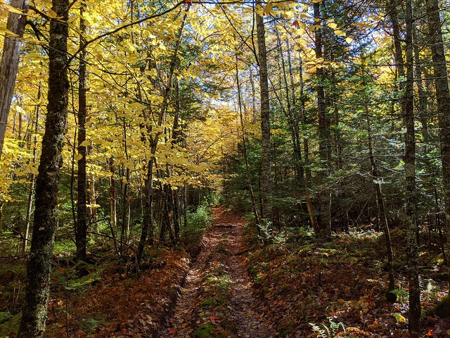 Old Trails and Autumn Colors