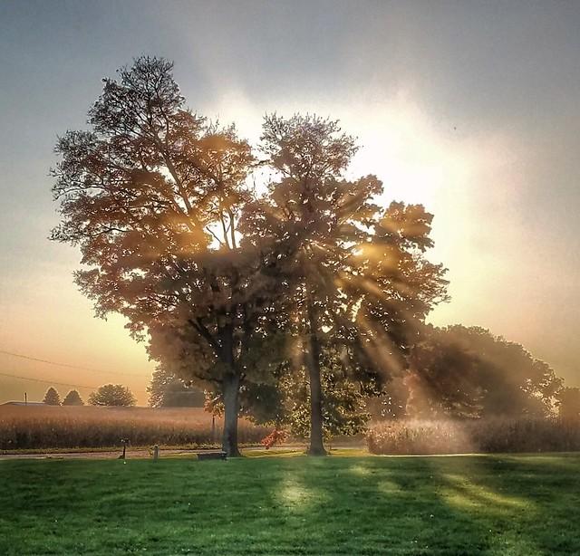 harvest glow....