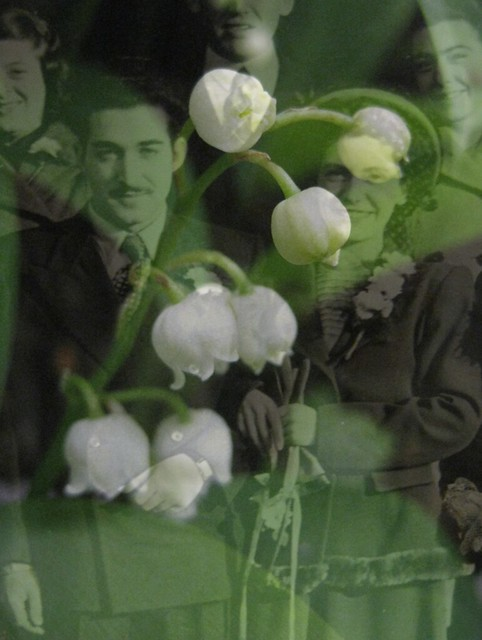 Lily-of-the-Valley, the Harbinger of Happiness