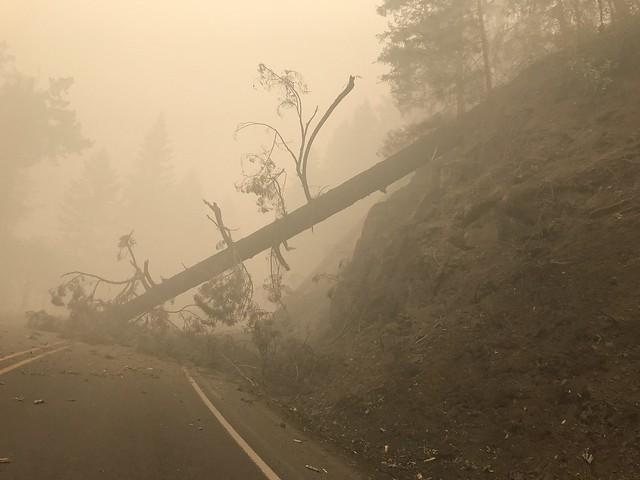 Fire weakened tree falls on the road