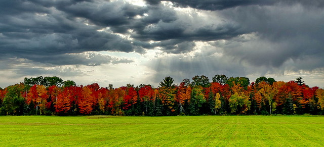 Ontario - Pembroke - Great Fall colors on a grey morning
