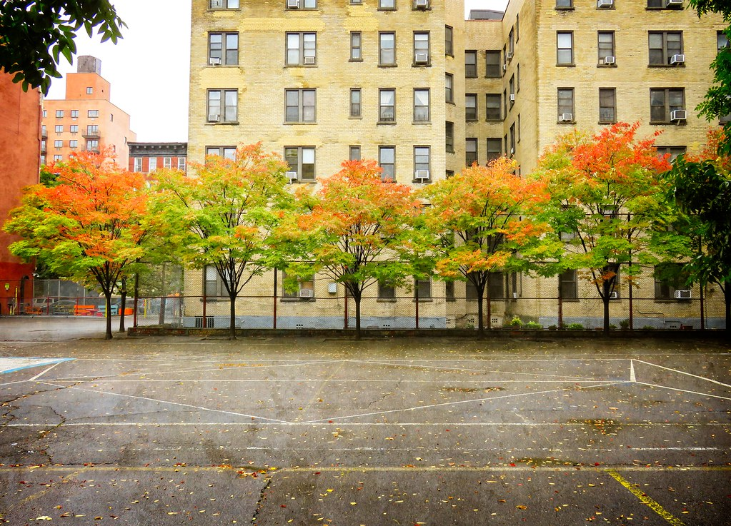 Fall foliage in the East Village