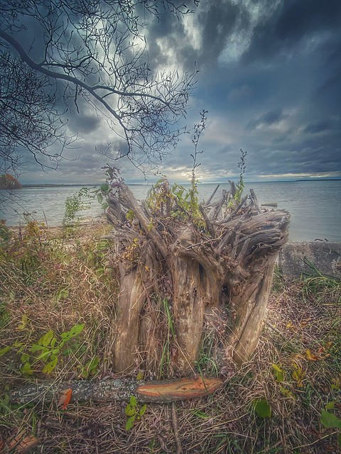 An interesting stump by the lake