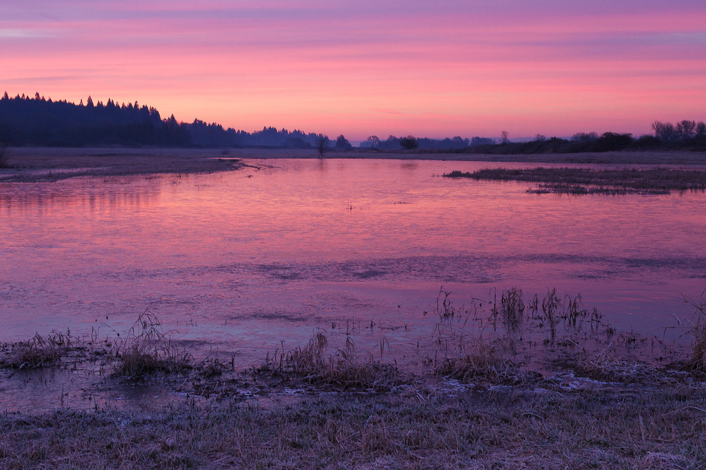 Pink skies reflect off a frozen Horse Lake at Ridgefield National Wildlife Refuge in Ridgefield, Washington on January 2, 2011. Original: _MG_2265.cr2