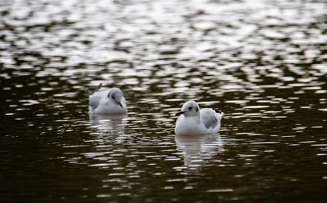 Seagull serenity..
