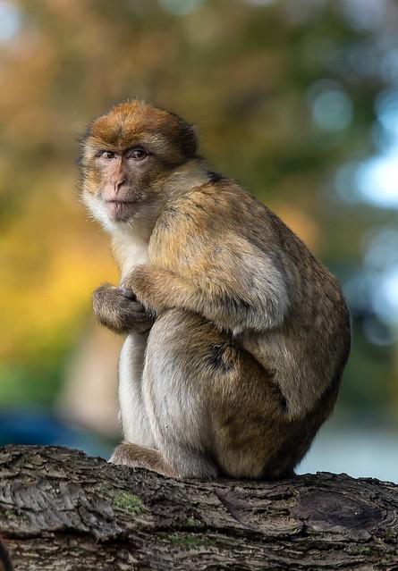 Monkey stare..