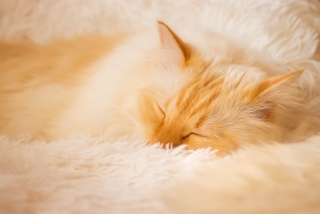 Dreaming in a cloud of fluff