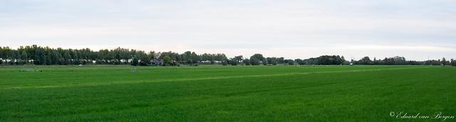 Links de bomen aan de N-216, rechts ligt Goudriaan.