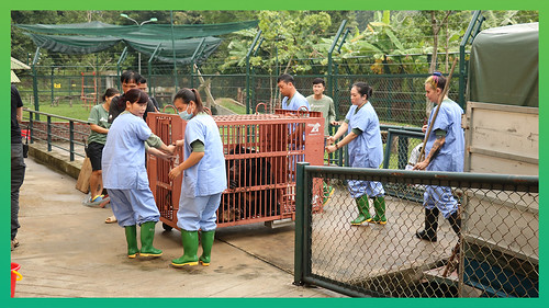 #UnoRescue - arrives at VBRC | by Animals Asia