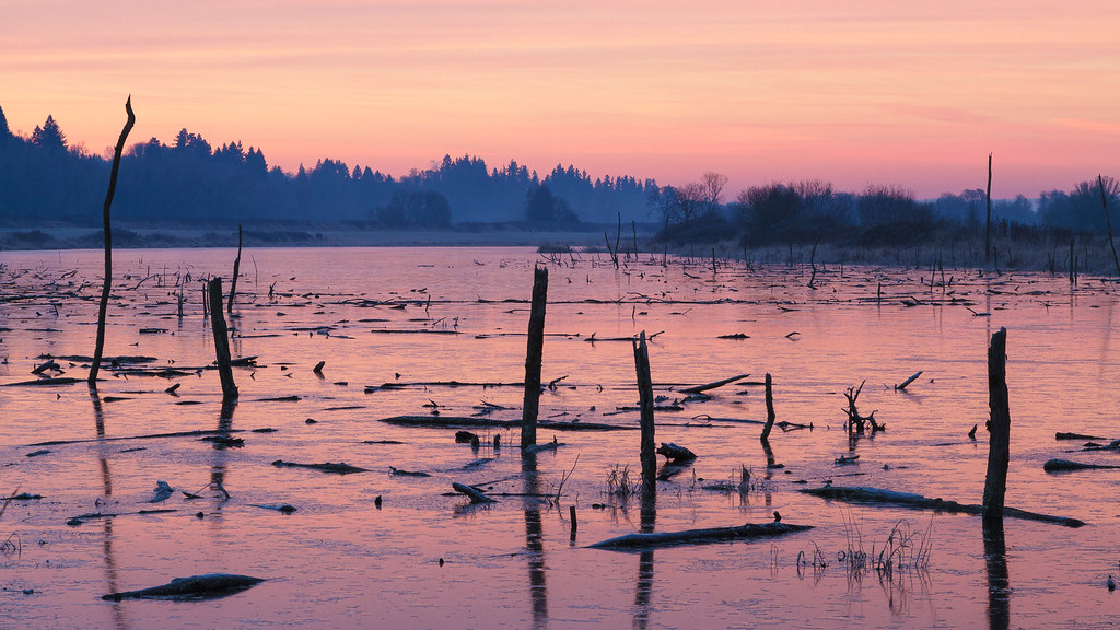 Fading pink skies reflect off the ice surrouning snags in Long Lake at Ridgefield National Wildlife Refuge in Ridgefield, Washington on January 2, 2011. Original: _MG_2459.cr2