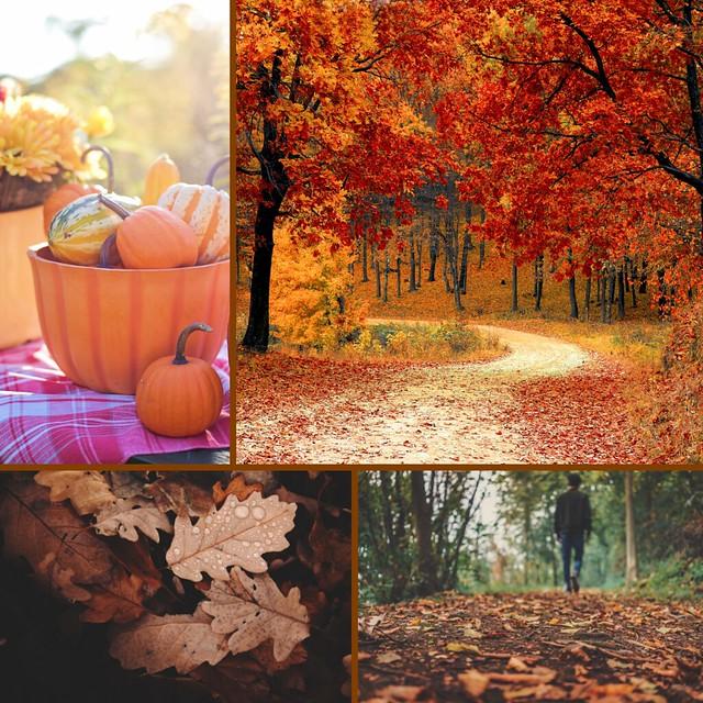 fall aesthetic 1
