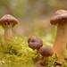 Macro Mushrooms_00068
