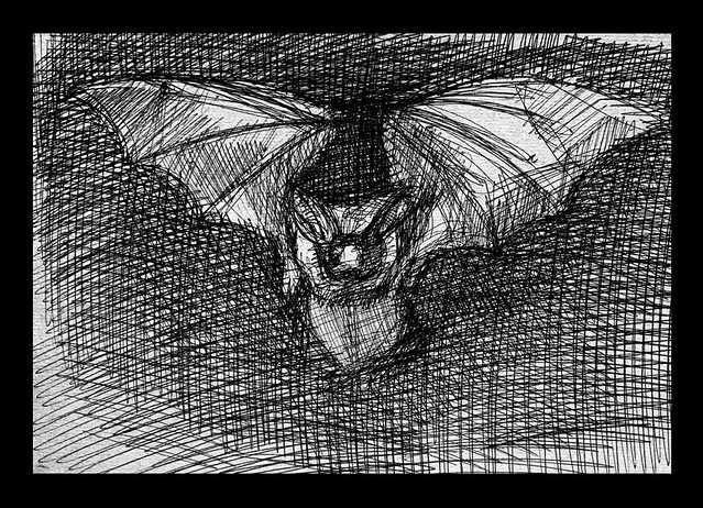 We have long eared bats flying over the garden this year. Ballpoint pin sketch, by jmsw, on recycled card. Only on this site, just for Fun.