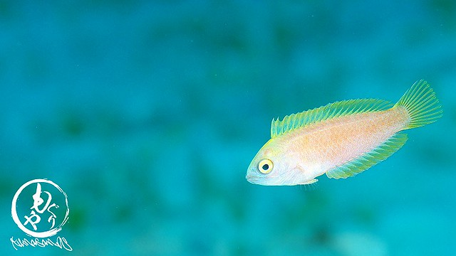 謎のお魚さん。