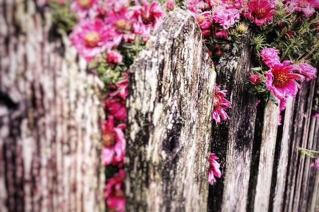 Blumen im Herbst / Flowers in autumn