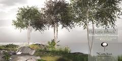The Little Branch - River Beech.v2 {Seasons} - Wanderlust Weekend, 50L