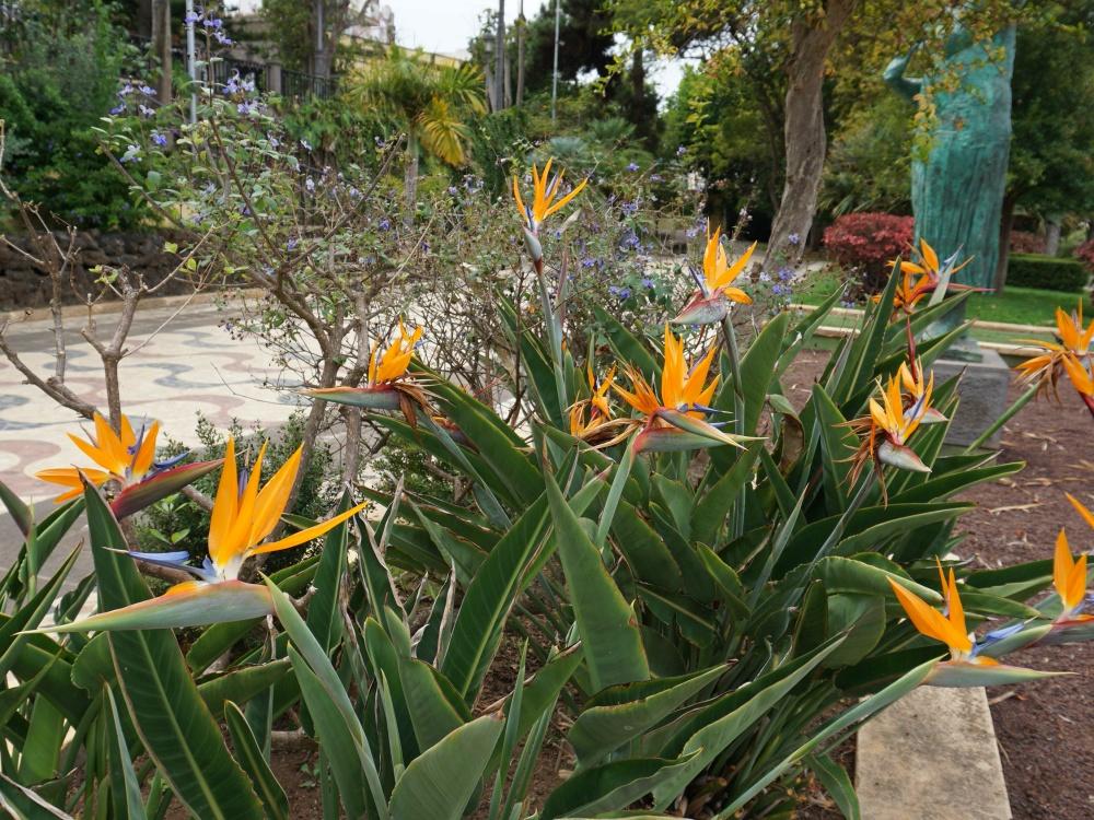 Canary Islands plants