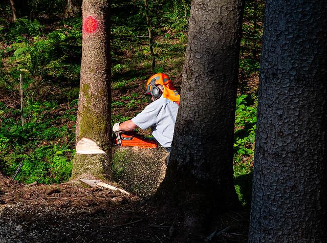 Waldarbeiter Lumberjack