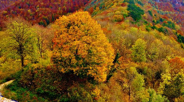 GERMANY, Schwäb. Alb, rund um den Hohenneuffen,  autumn series , 60015/13080