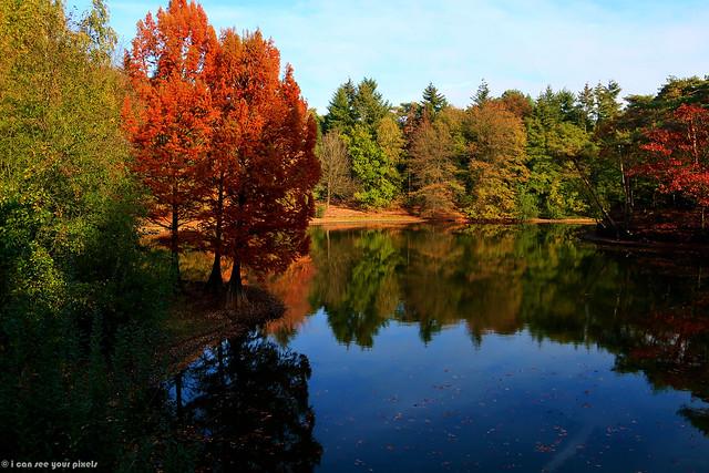 Autumn Colors (in Explore)