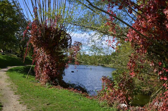 Les couleurs d'automne au bord du lac