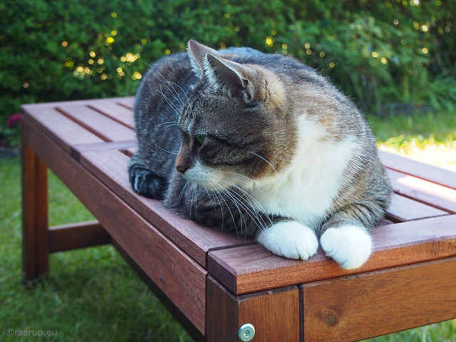 Catphabet: B is for Bench - Happy Caturday