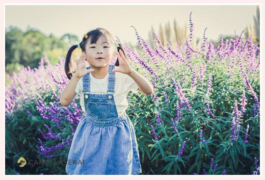 秋の西日が当たるお花畑の中の女の子