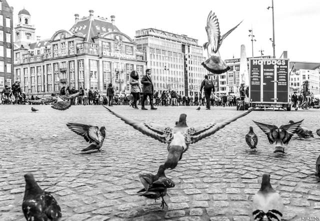 Free As A Bird 2015