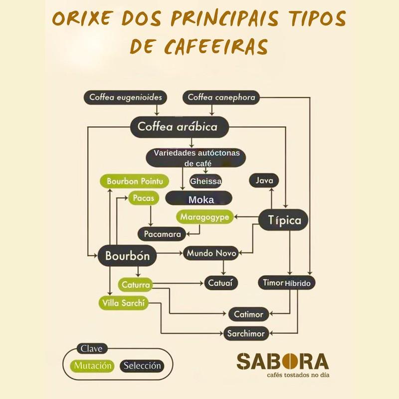 Orixe dos principais tipos de Cafeiras