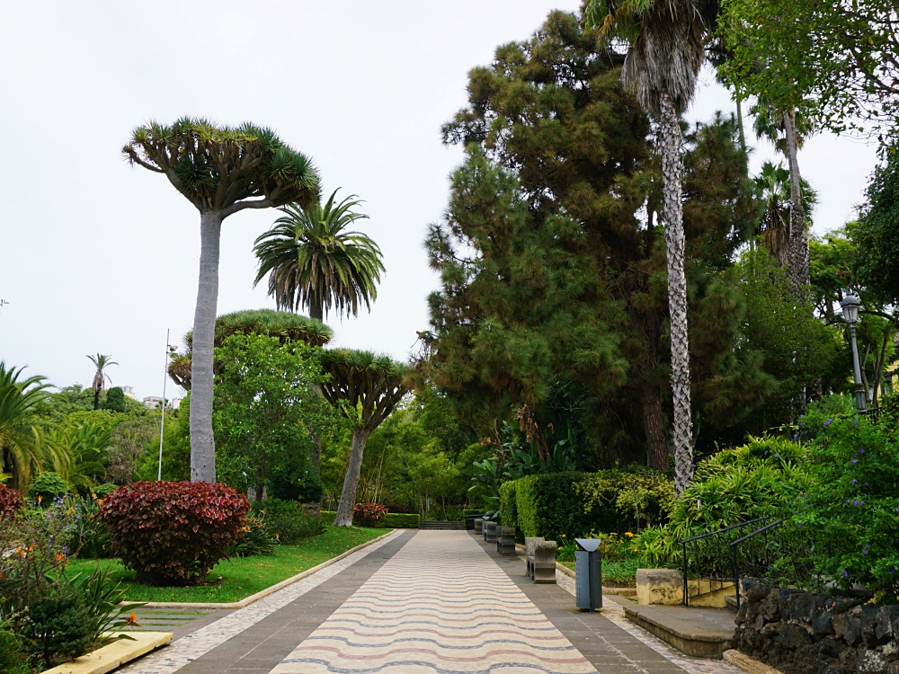 Canary Islands trees