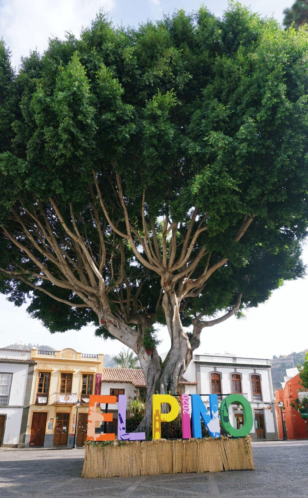 Teror Tree Gran Canaria