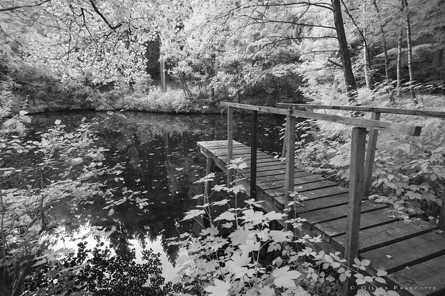 Pond in the woods.