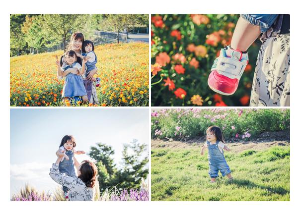 秋のモリコロパークのコスモス畑で家族写真 姉妹